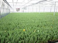 Floraweg 59 A in Roelofarendsveen 2371 AM