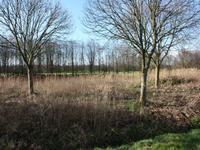 Kievitslanden - Tjotter in Almere 1349