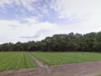 Diesdonkerweg in Ommel 5724 PE