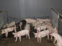 Koekoek 4 A in Siebengewald 5853 EG