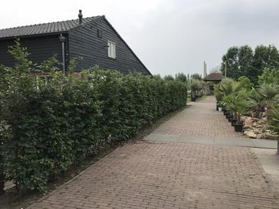 Belversestraat 4 in Haaren 5076 PX