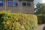 Boerhoorn 11 in Glimmen 9756 CK