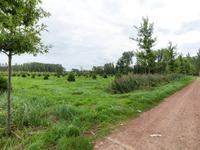 Kastanjestraat 8 in Sint-Oedenrode 5492 EZ