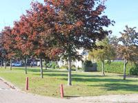 Westwiek 12 in Etten-Leur 4872 XV