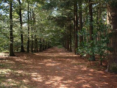 8 hunzebergen impressie bos