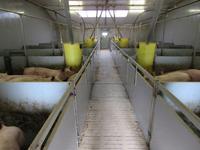 Boerijendijk 12 in Groenlo 7141 HB