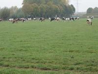Meeuwerdensestraat 3 in Herveld 6674 MB