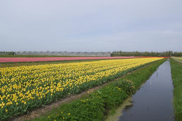 Loosterweg 57 A Nabij in Voorhout 2215 TM