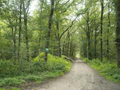 Mooie bosrijke omgeving rond het park Eysingastate