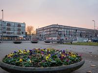 Mijnsherenlaan 217 D in Rotterdam 3081 GR