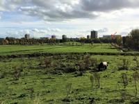 Soderblomplaats 464 in Rotterdam 3069 SM