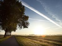 Boomgaard | Bnr. 612 Tweekapper in Nieuwendijk 4255