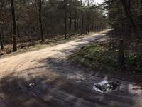 Bosrand in Lieshout 5737 SE