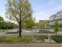 Veldmaarschalk Montgomerylaan 113 in Eindhoven 5612 BB