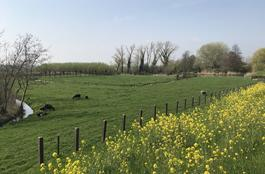 Bazeldijk - Weidegrond in Hoogblokland 4221 XW