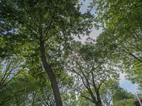 Rosmolen 69 in Alphen Aan Den Rijn 2406 JX