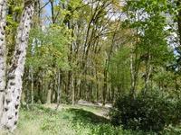 Bosje van Zeverijn
