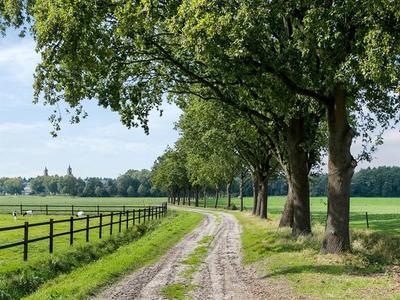 strijbeekseweg15bulvenhout-42