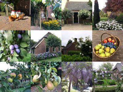 collage tuin boonenweg 2