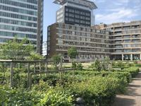 Bos En Lommerplantsoen 25 A in Amsterdam 1055 AA
