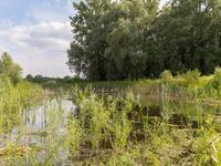 Beekweide 8 in Barneveld 3771 PM
