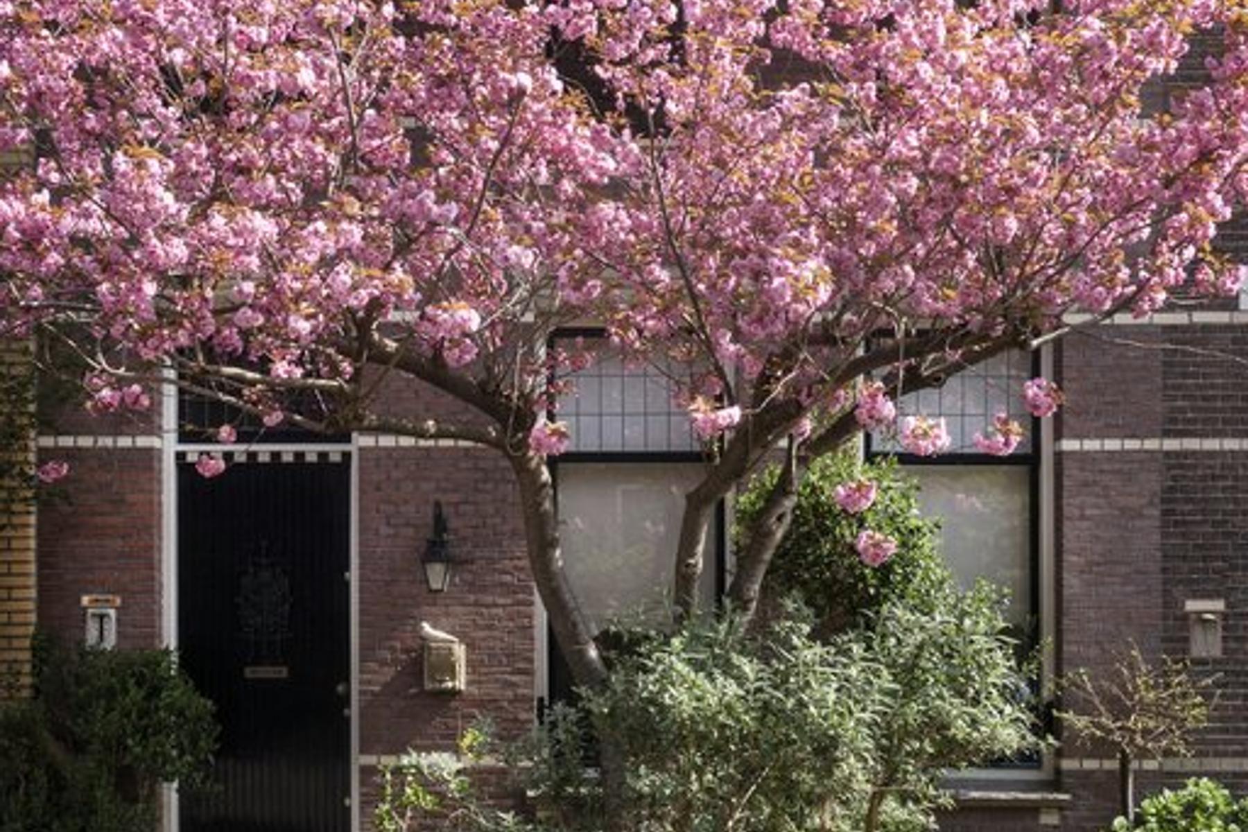 Frederik Hendrikstraat 12 in Utrecht 3583 VM