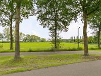 De Scheifelaar in Veghel 5463 GV