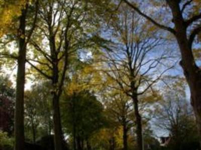 Weteringlaan 4 in Wassenaar 2243 GJ