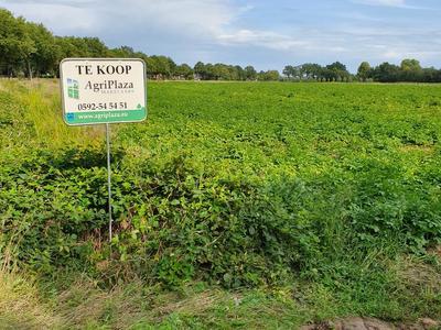 Trekgatenweg in Hollandscheveld 7913