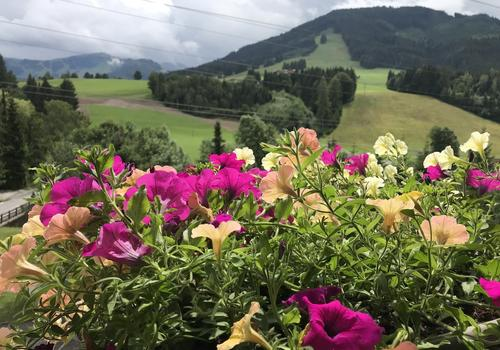 Schinking in Saalfelden-Oostenrijk