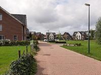 Watersalamander in Giesbeek 6987