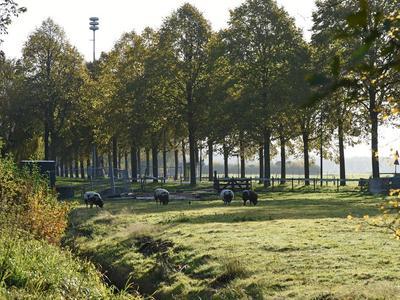 Nieuw-Loosdrechtsedijk 89 in Loosdrecht 1231 KN