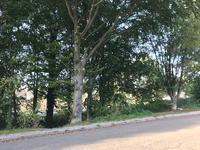 Dassenlaan 21 in Landgraaf 6371 GX