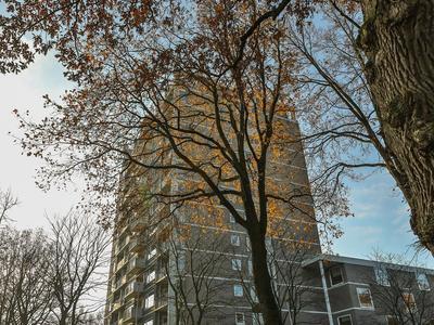 Helper Brink 61 161 in Groningen 9722 EK