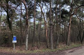 Heibloemsedijk/Heide in Heeswijk-Dinther 5473 TC