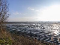 Drogedijk 43 in Fijnaart 4793 TB